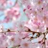 【浅間神社】桜の女神 コノハナサクヤヒメのお話