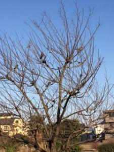 狙う鳥たち