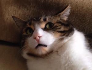 臭い顔の猫
