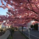 散歩のススメ 春(3月半ば)