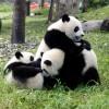 珍獣ぞろいの上野動物園にいこう!