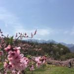 春の八ヶ岳 花の季節に馬に乗る