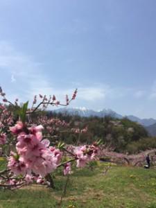 八ヶ岳桃園